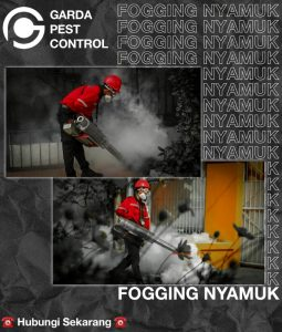 video fogging nyamuk